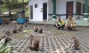Cerita Monyet di Pemandian Wendit Malang