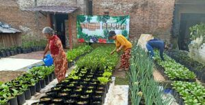 Omah Sayur, Lahan Kosong di Malang yang Disulap Warga Jadi Areal Pertanian Bersama