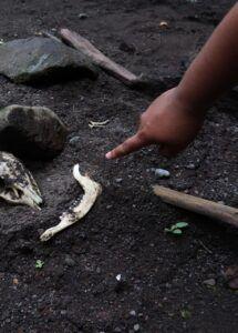 tulang binatang