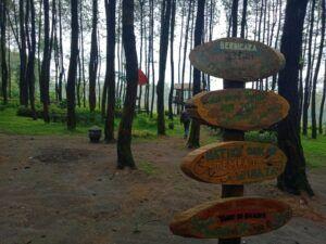 Hutan Pinus Semeru HPS Malang
