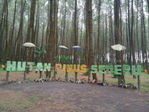 Hutan Pinus Semeru atau HPS merupakan salah satu destinasi wisata di Malang