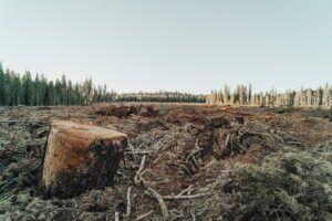 ilustrasi penebangan hutan