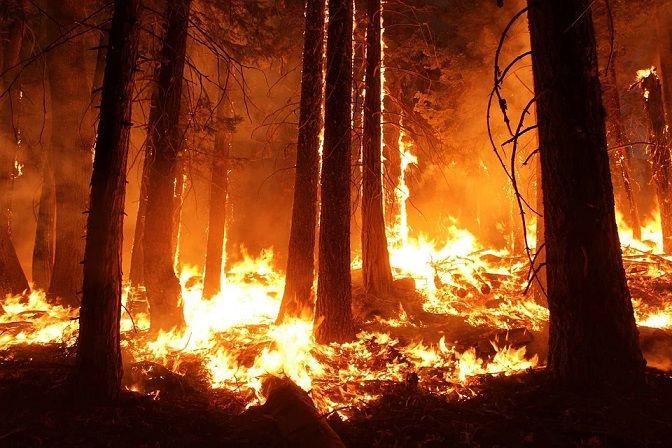Kebakaran hutan yang merupakan salah satu bencana akibat dampak pemanasan global dan perubahan iklim. (Foto: Pixabay)