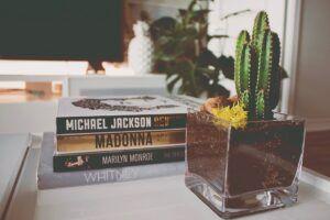 Kaktus, tanaman hias untuk kamar kos
