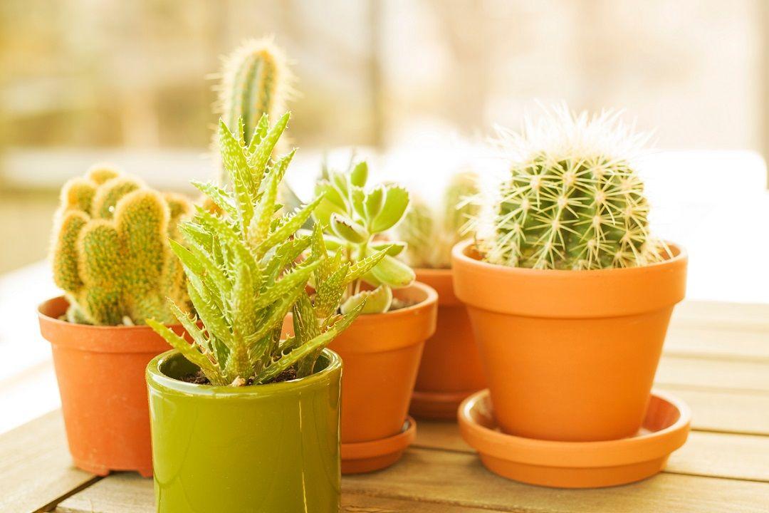tanaman hias yang cocok untuk kamar kos