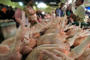 Harga Daging Ayam Naik, Jember Inflasi 0,44 Persen