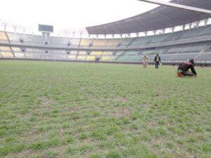 Beberapa pekerja tampak sibuk memelihara kesehatan rumput Stadion GBT, Surabaya.