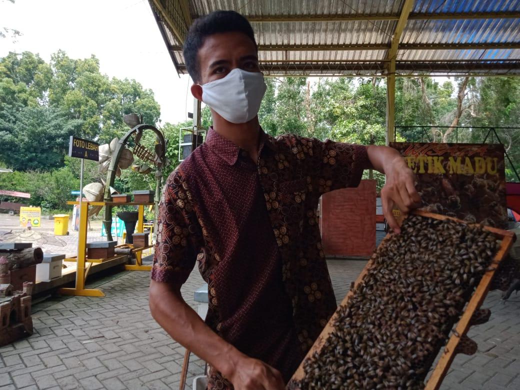 Bee Keeper Agro Tawon Wisata Petik Madu Lawang Hendro saat memperlihatkan sarang lebah madu yang menghasilkan propolis. (Foto:Rap/Tugu Jatim)