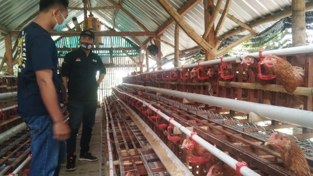 Tim CSR Semen Indonesia Pabrik Tuban (SIG) melakukan monitoring kepada OMS ayam petelur yang berada di Kecamatan Jenu. (Foto:Humas PT SIG Pabrik Tuban/Tugu Jatim)