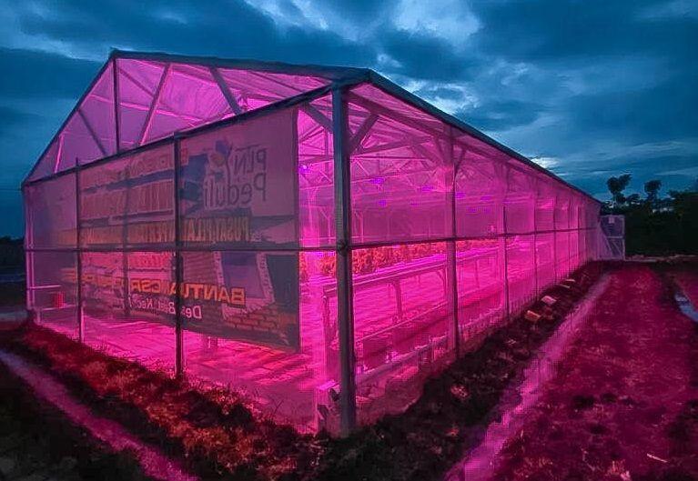 Program hidroponik sinar lampu UV di Pusat Pelatihan Pertanian & Pedesaan Swadaya (P4S) Buana Lestari di Wisata Edukasi Tani Terpadu (WETT) Betet, Desa Betet, Kabupaten Nganjuk. (Foto: Dokumen/PLN)