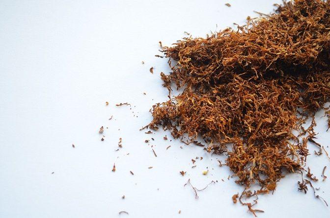 Ilustrasi rekomendasi tembakau untuk rokok tingwe. (Foto: Pixabay) tugu jatim