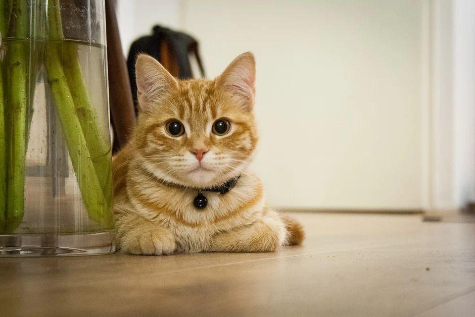 Ilustrasi kucing, hewan lucu yang bakal gelisah ketika ditinggal pemiliknya. (Foto: Pixabay)
