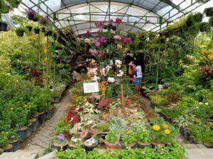Toko bunga Bagus Indah Tri Aulia (BITA) di Jl.Veteran Bojonegoro. (Foto: Mila Arinda/Tugu Jatim)