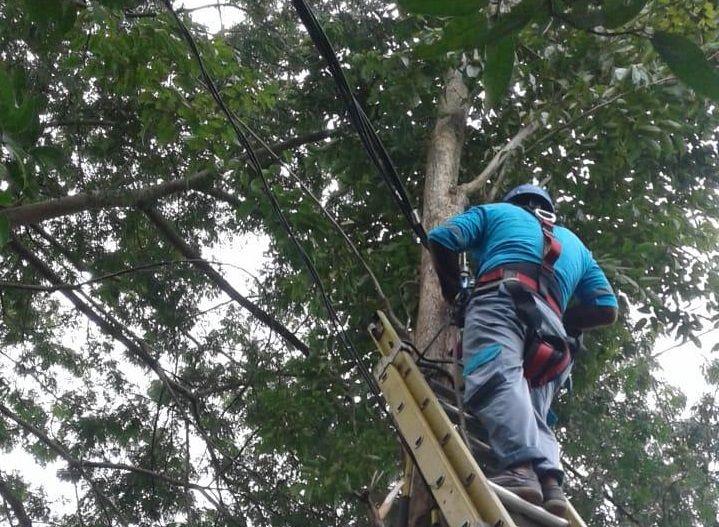 Petugas PLN Unit Ngadiluwih sedang memperbaiki kabel putus di Manisrenggo. (Foto: Noe/Tugu Jatim)