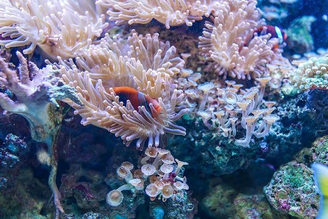 Ilustrasi terumbu karang. (Foto: Pixabay) fakta terumbu karang tugu jatim