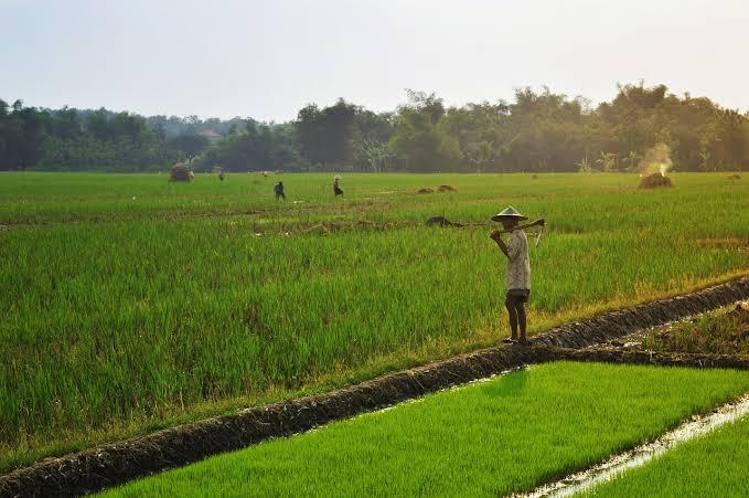 Ilustrasi petani. (Foto: Pixabay/Tugu Jatim)