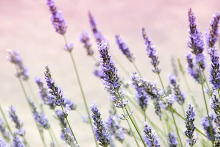 Ilustrasi bunga yang dapat dimanfaatkan untuk kesehatan. (Foto: Unsplash/Tugu Jatim)
