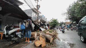 Pohon juga menimpa pengendara sepeda motor di Kota Malang. (Foto: Azmy/Tugu Jatim)