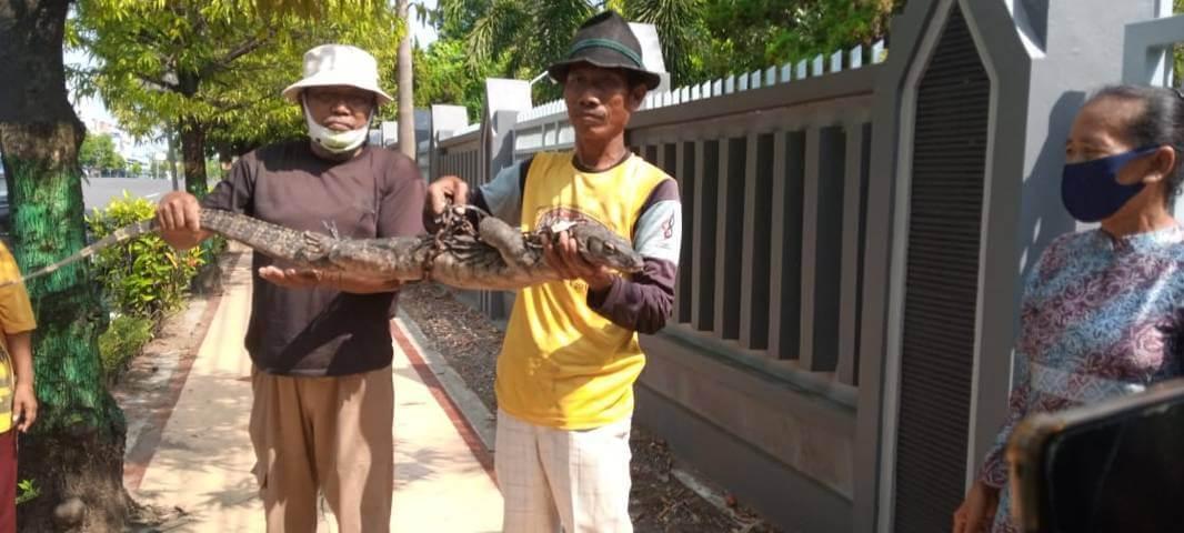 Warga berhasil menangkap hewan biawak. (Foto: Rochim/Tugu Jatim)