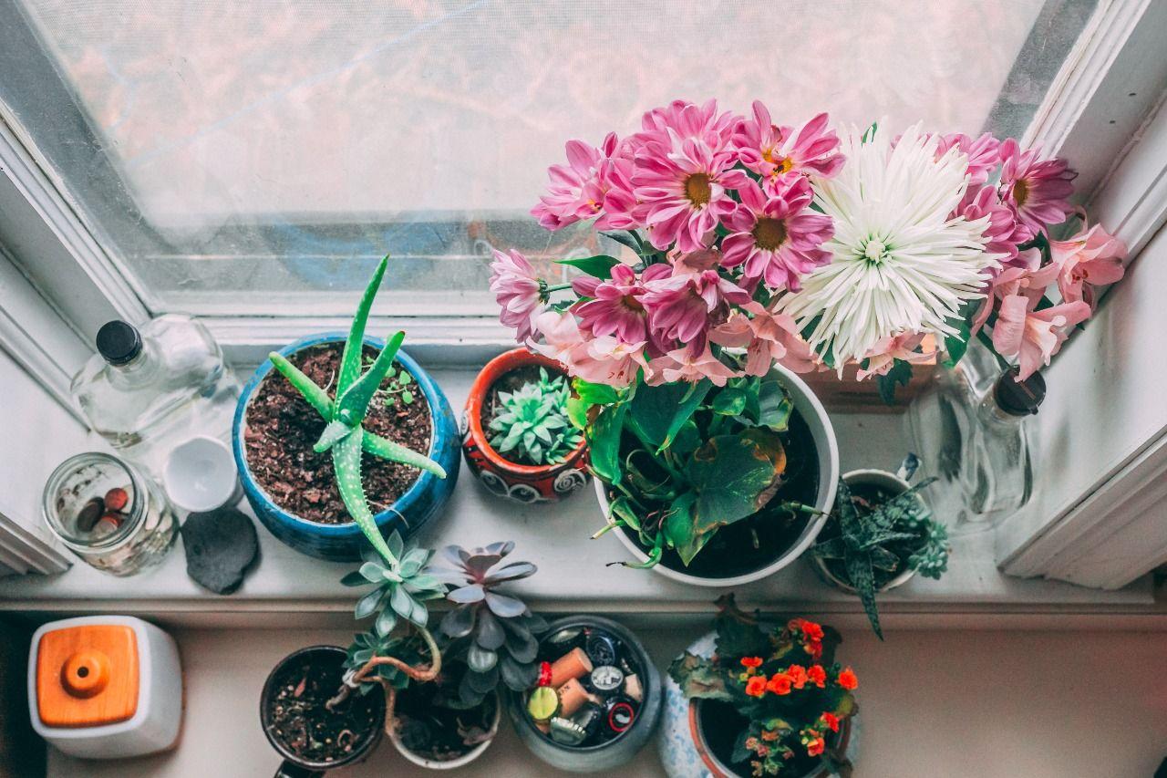 Ilustrasi merawat tanaman di dalam rumah. (Foto: unsplash/Tugu Jatim)