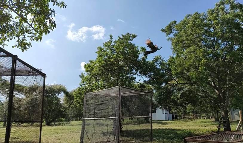 Dalam rangka Hari Konservasi Alam Nasional (HKAN) Ke-12 tahun 2021, Balai Besar Konservasi Sumber Daya Alam Jawa Timur (BBKSDA Jatim) melakukan lepas liar satwa di Taman Nasional (TN) Baluran. (Foto: BBKSDA Jatim)