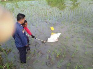 Proses evakuasi anakan buaya di area persawahan di Desa Jono, Kecamatan Temayang, Kabupaten Bojonegoro, Rabu (23/3/2021). (Foto: Dokumen/Damkar Bojonegoro)
