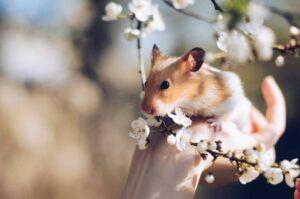 Ilustrasi hamster. (Foto: Pexels/Tugu Jatim)