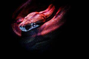 Ilustrasi ular. (Foto: Pexels/Tugu Jatim)