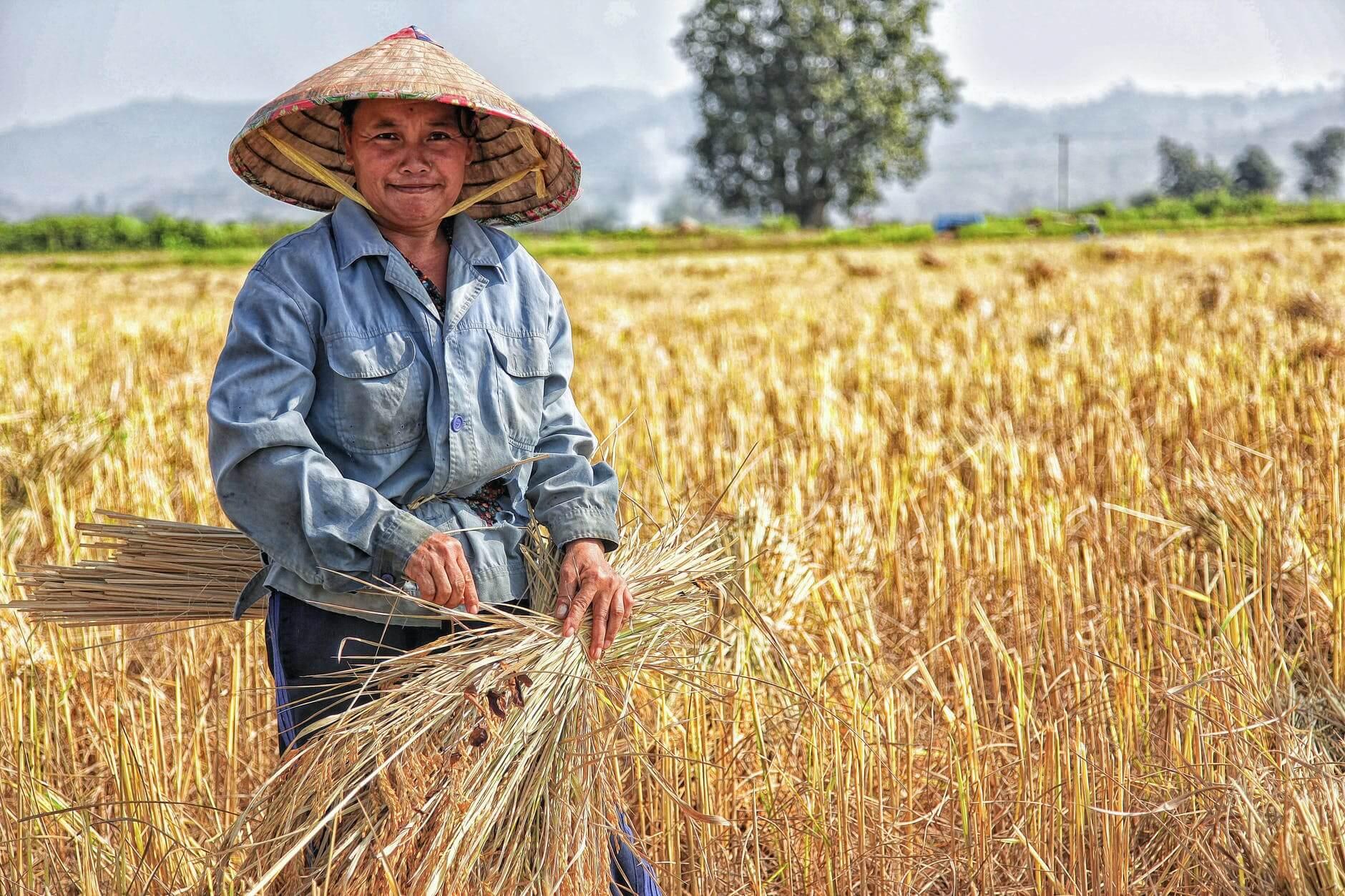 Ilustrasi petani di sawah. (Foto: Pexels/Tugu Jatim)