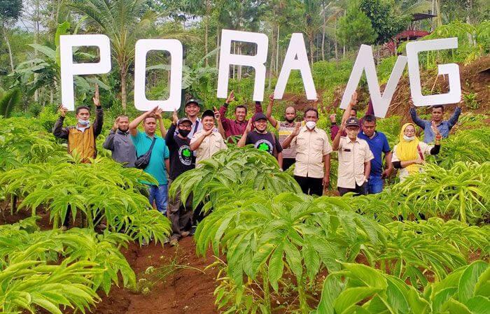 Perkumpulan Petani Porang Trenggalek (PPT) berfoto bersama tanaman porang yang tersebar di lahan seluas 3.000 hektare. (Foto: Zamz/Tugu Jatim)