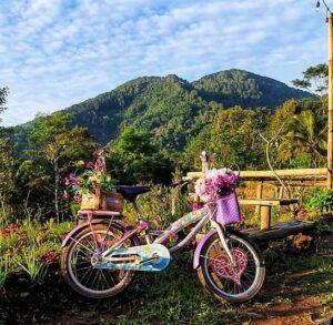 Gunung Giyanti dengan hutan pinus milik Perhutani yang membuat udara segar di Pawon Teh Tudung.(Foto:Dok/Tugu Jatim)