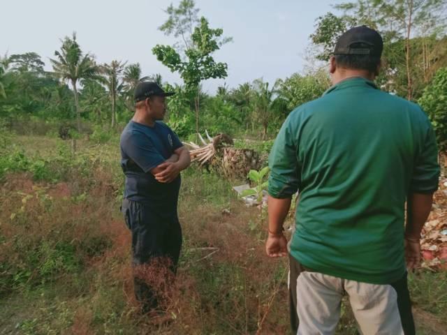 Limbah sawit yang tak cepat membusuk merepotkan petani.(Foto: Rap/Tugu Jatim)