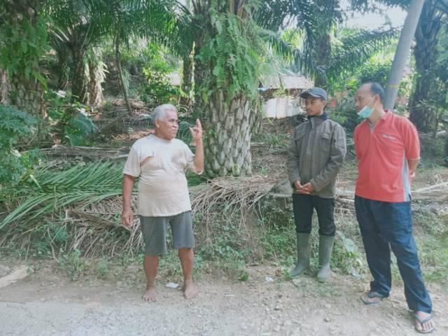 Ilustrasi kajian soal sawit yang nantinya akan dilaksanakan Pemkab Malang bersama UB. (Foto: Rap/Tugu Jatim)