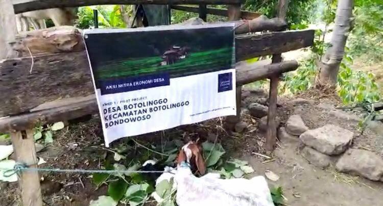 Gerakan Ekonomi CCF membuat mitra ternak dengan warga desa. (Foto: Dokumen/Tugu Jatim)