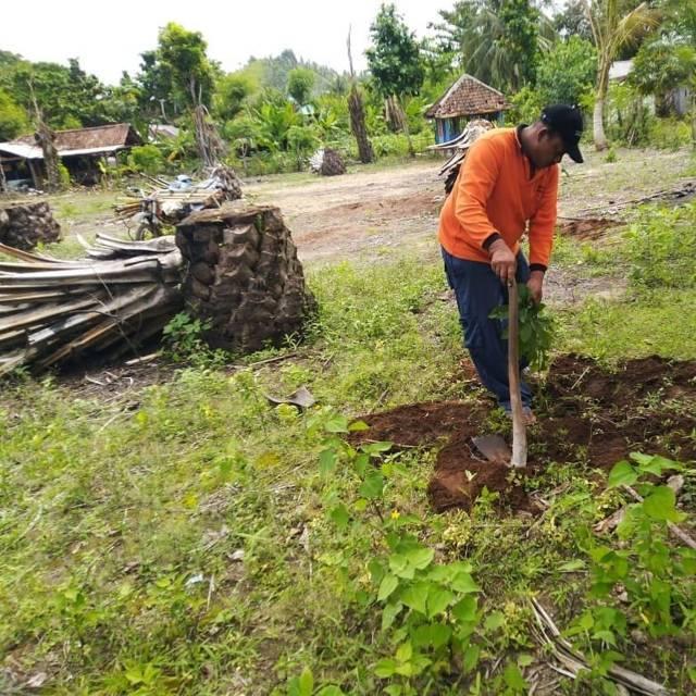 Warga Desa Tumpakrejo, Kecamatan Gedangan, Kabupaten Malang, saat menjebol tanaman sawit. (Foto:Rap/Tugu Jatim)