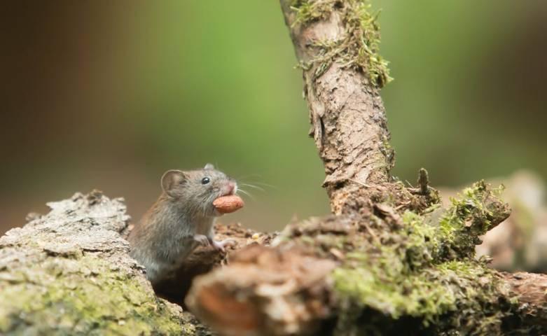 Ilustrasi lomba tangkap tikus. (Foto: Pexels/Tugu Jatim)