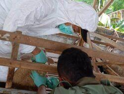 20 Kambing Mati Mendadak, Pemkab Kediri Khawatir Ternak Diserang Antraks