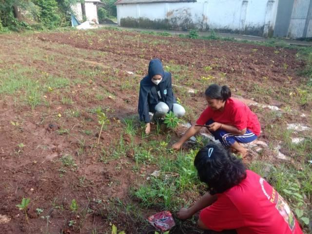 Budi daya tanaman porang di Sumenep, Jawa Timur yang mulai naik daun lantaran memiliki nilai ekonomi tinggi bagi para petani. (Foto: Dokumen) tugu jatim