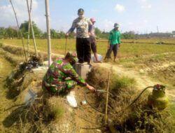 Basmi Hama Tikus, Petani Sumurjalak Tuban dan Personel TNI Lakukan 'Gropyokan Tikus'