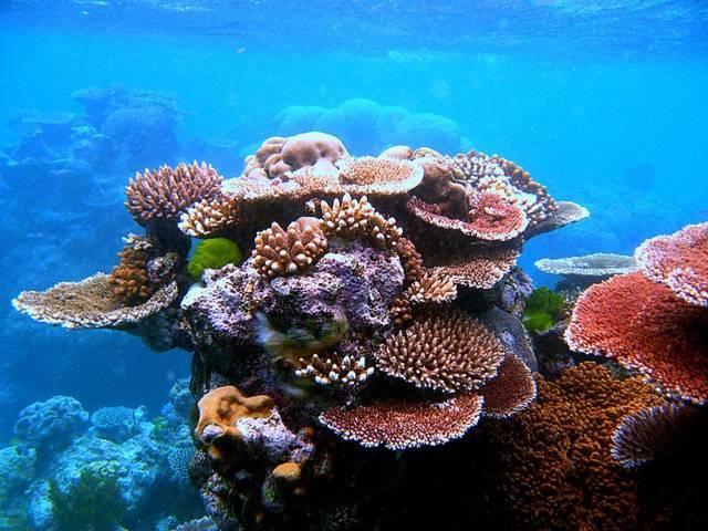 Beberapa terumbu karang yang berada di Great Barrier Reef, Australia. GBR dinominasikan UNESCO untuk masuk sebagai Situs Warisan Dunia dengan status 'dalam bahaya'. (Foto: Wikipedia) tugu jatim