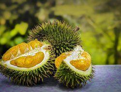 Cara Membuat Chips Crispy Lezat Dari Biji Durian
