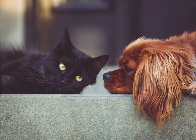 Ilustrasi anjing dan kucing yang kerap jadi hewan peliharaan manusia dan rentan terpapar Covid-19. (Foto: Pixabay) tugu jatim