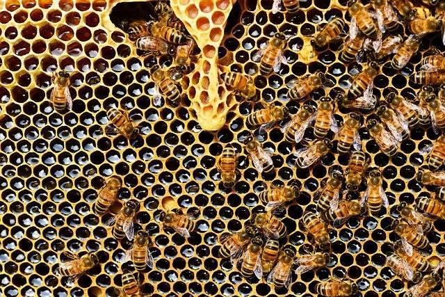 Ilustrasi madu, merupakan makanan/minuman yang bisa disimpan secara jangka panjang dan cocok untuk dikonsumsi saat pandemi karena banyak mengandung khasiat. (Foto: Pixabay)