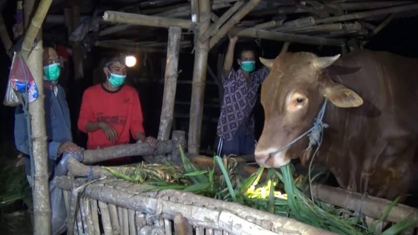 Warga Kabupaten Tuban menjaga kandang bahkan melakukan ronda keliling untuk memastikan keamanan hewan ternaknya tidak dicuri jelang Idul Adha. (Foto: Moch Abdurrochim/Tugu Jatim)