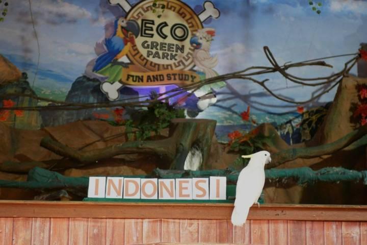 Burung kakatua di Eco Green Park, Kota Batu, yang bertugas menuliskan kata Indonesia saat mengikuti upacara bendera Merah Putih, Senin (17/08/2021). (Foto: Jatim Park Group/Tugu Jatim)