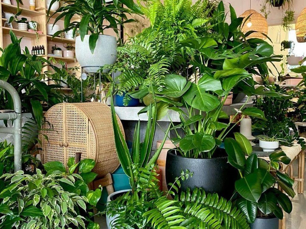 Buat kebun minimalis di rumah sangat menyenangkan di masa pandemi/tugu jatim