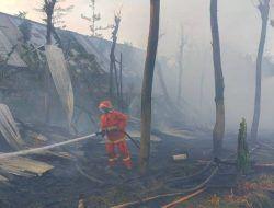 Kebakaran Kandang Ayam di Kediri, 5.500 Ekor Ayam Mati Terpanggang