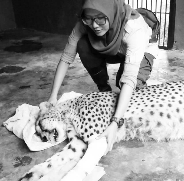 Dokter hewan di Jatim Park Rossy Margaretha Riupassa saat merawat seekor macan tutul. (Foto:JTP Group/Tugu Jatim)