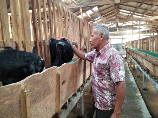 Handri Isriawan, seorang veteran yang tengah menunjukkan kambing etawa miliknya. (Foto: M Sholeh/Tugu Malang/Tugu Jatim)