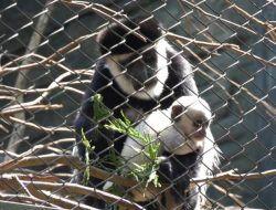 6 Satwa di Batu Secret Zoo Melahirkan saat Masa PPKM Darurat